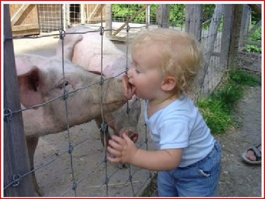 About the Swine Flu...