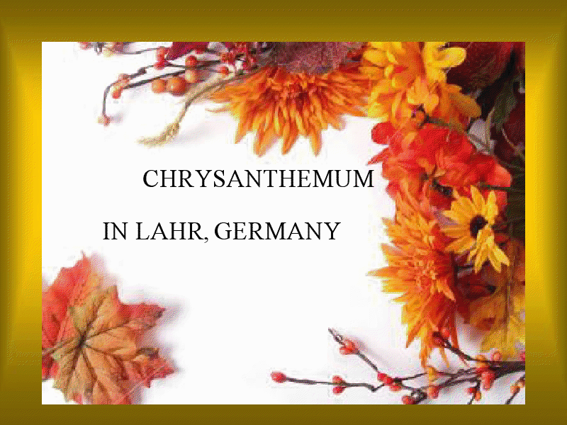 Chrysanthemum Festival in Lahr - Germany