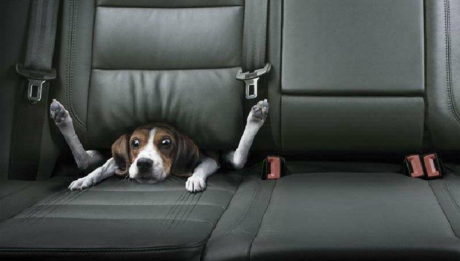 Are You Speeding? I am Not Speeding...!