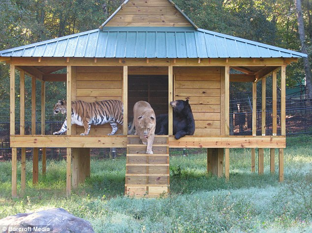 Lions, Tigers and Bears - Best Friends?