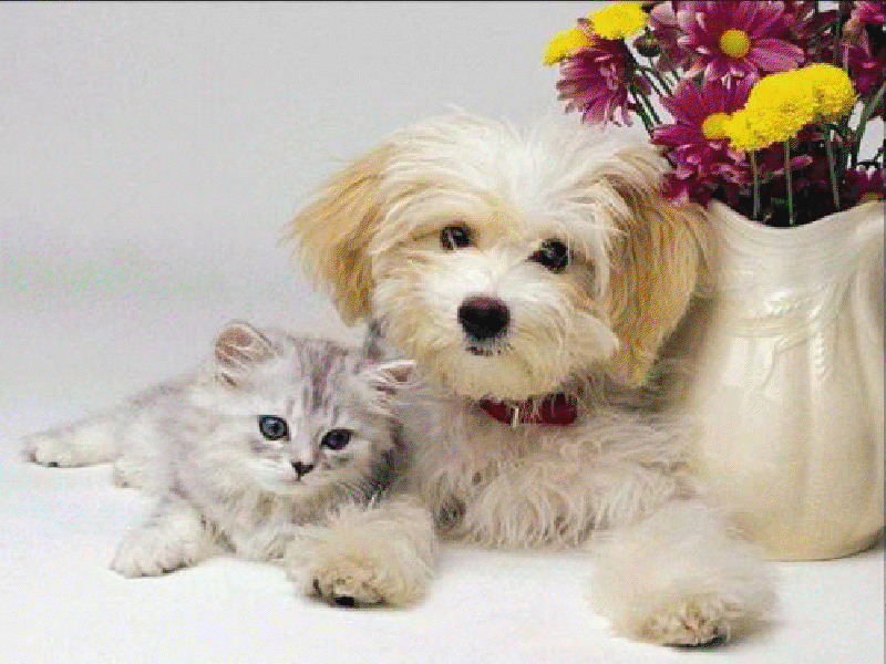 Aawww, Our Wonderful Pets!